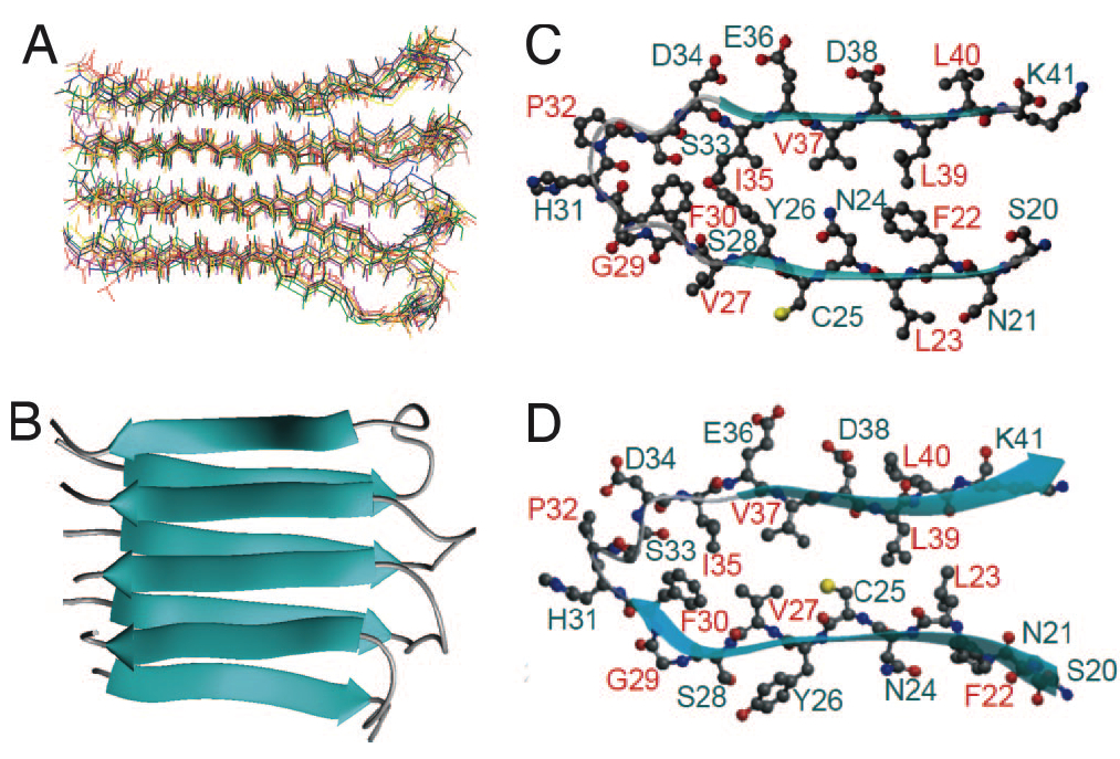 elucidating protein structure