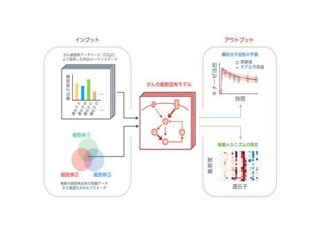がんゲノム情報×細胞シミュレーションで個別化医療へ大きく前進―誰にでも使える創薬支援解析ツールを開発・公開!