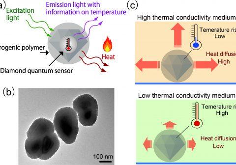 """""""生きる""""とは?私たち生物の細胞が熱を伝えるメカニズムの解明へ。 ナノ量子センサーを新開発し、細胞内の熱伝導率を初計測"""