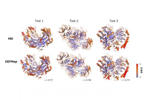 タンパク質の柔らかさを予測するAI  -巨大かつ複雑な生体高分子の機能メカニズム解明に期待-